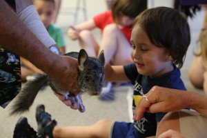 A child pets a chinchilla at the library